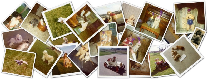 a collage of photos of my dog Carmel and her family and friends