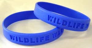 a bright blue 'Wildlife Warriors' wristband