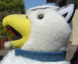 my stuffed Reed College griffin mascot wearing a 'Wildlife Warriors' wristband as a collar